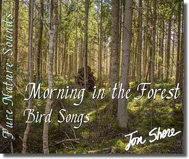 Pure Nature Sounds Morning in the Forest Bird Songs by Jon Shore